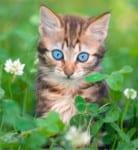 kitten-sm